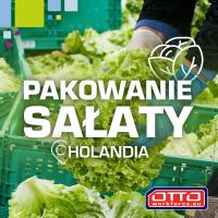 Mycie i pakowanie sałaty - Duża ilość godzin! (Holandia)
